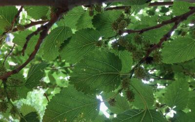 tree fruiting